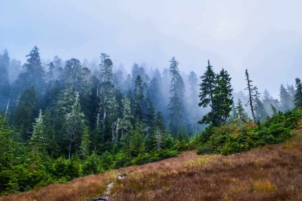 misty hiking trails in Prince Rupert Canada