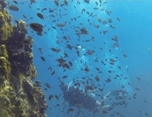 Underwater world scuba diving active holidays in Thailand