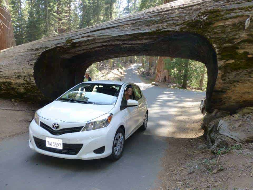 Driving through trees in Sequoia National Park, California Photo in Road Trip Across the USA