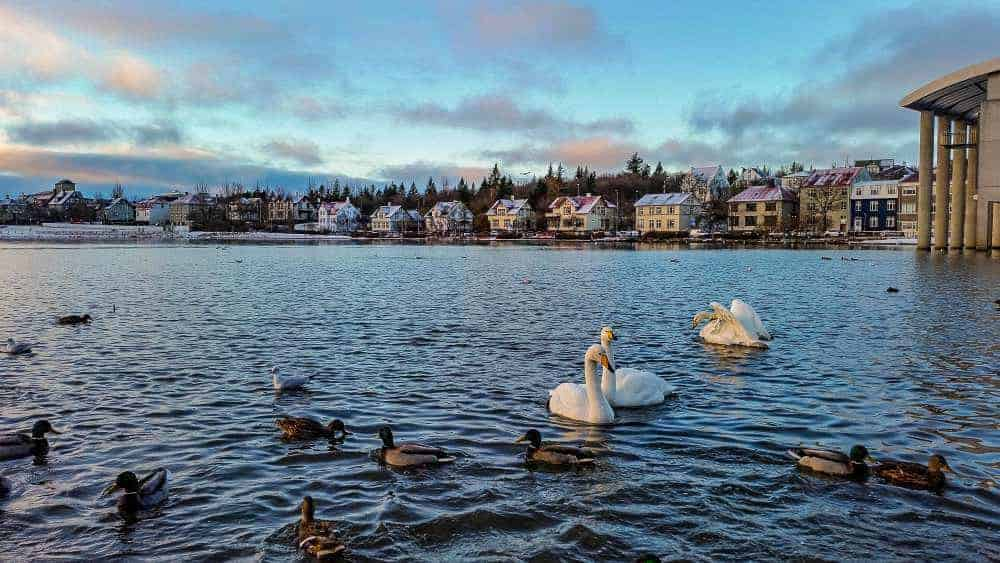 Reykjavik Free City Walking Tour. Photo by Bec at Wlyd Family Travel