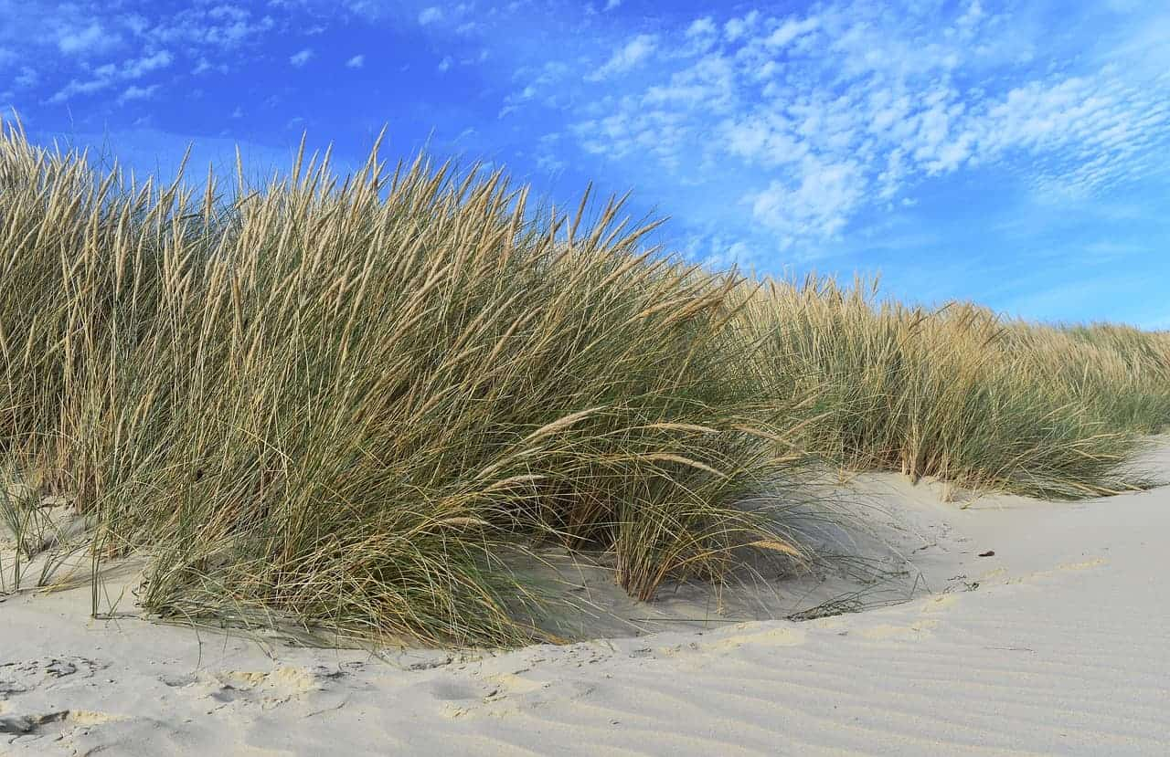 Beaches and grasses