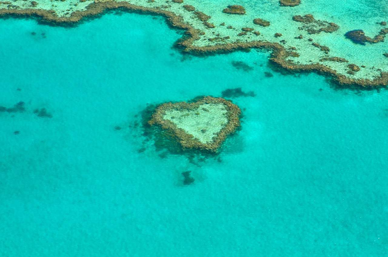 Heart coral in the Great Barrier Reef
