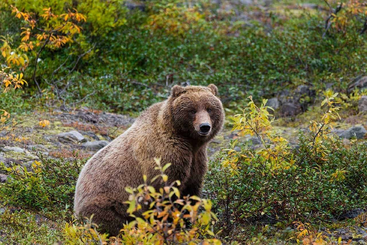 Join a grizzly bear tour in Prince Rupert