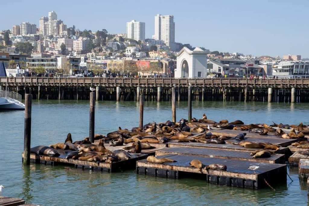 Pier 39 and sea lions living in San Francisco