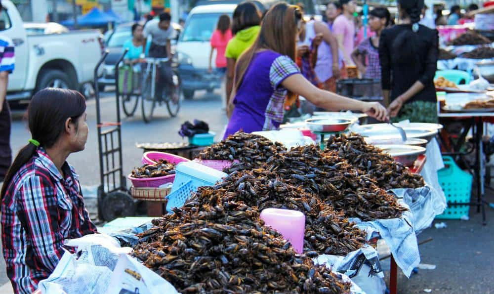 Fried insects Yangon