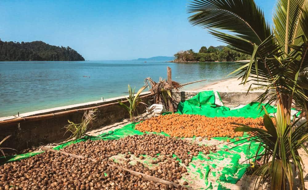 preparing Betel nut on Dome island