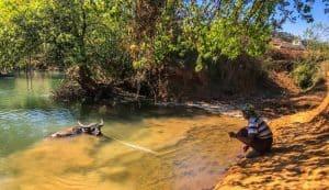 water buffalo sharing the swimming hole